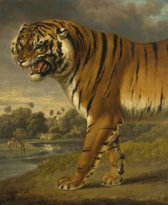 A Tiger, Charles Towne, 1818, OP338